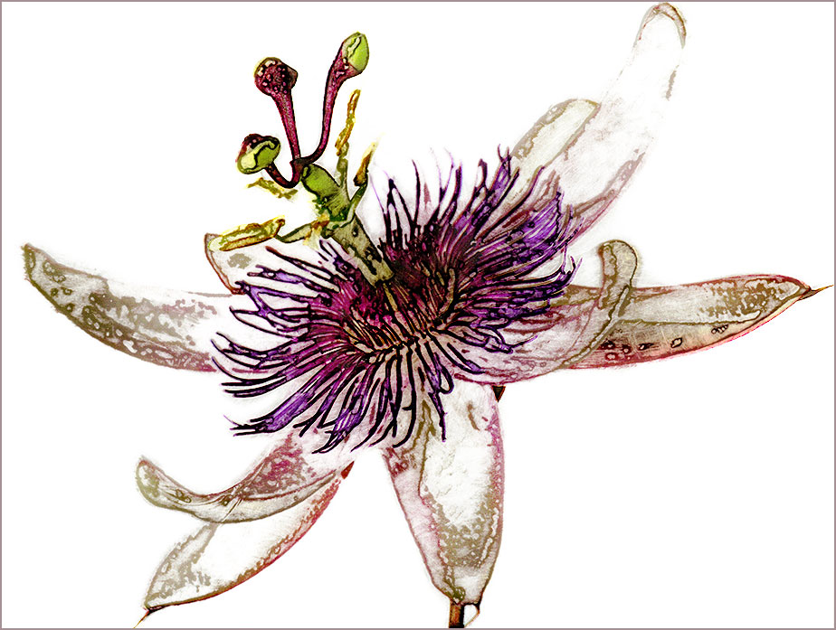 passionflower print