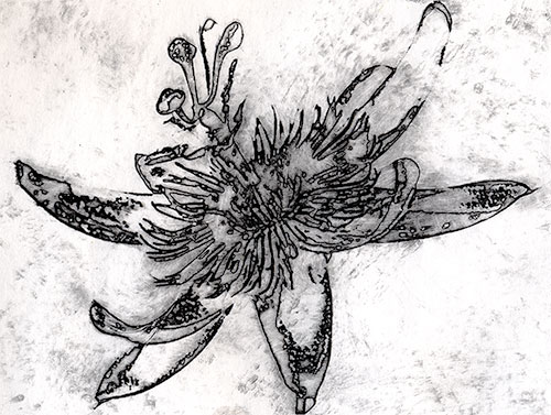 Intaglio print of a passionflower