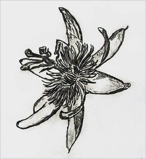 Drypoint print of a passionflower