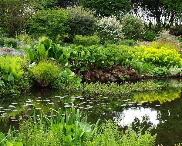 Water garden planting at the Beth Chatto Gardens