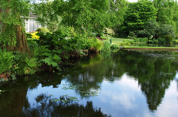 Water garden at the Beth Chatto Gardens