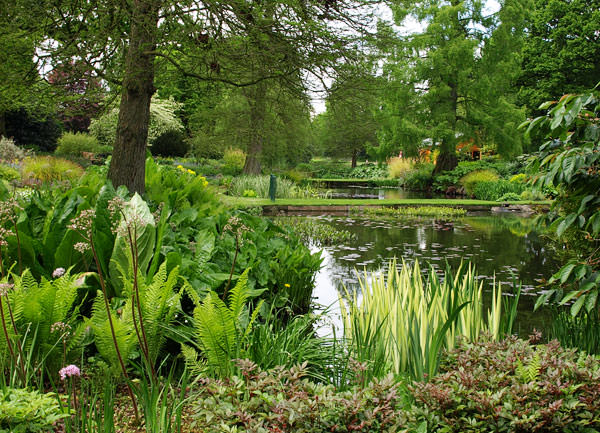Looking across part of the water garden
