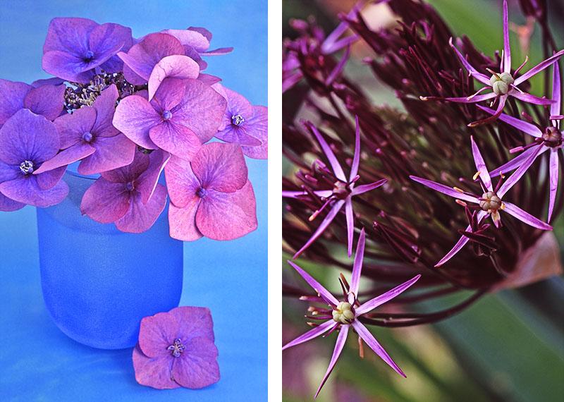 Left: Hydrangea Right: Allium