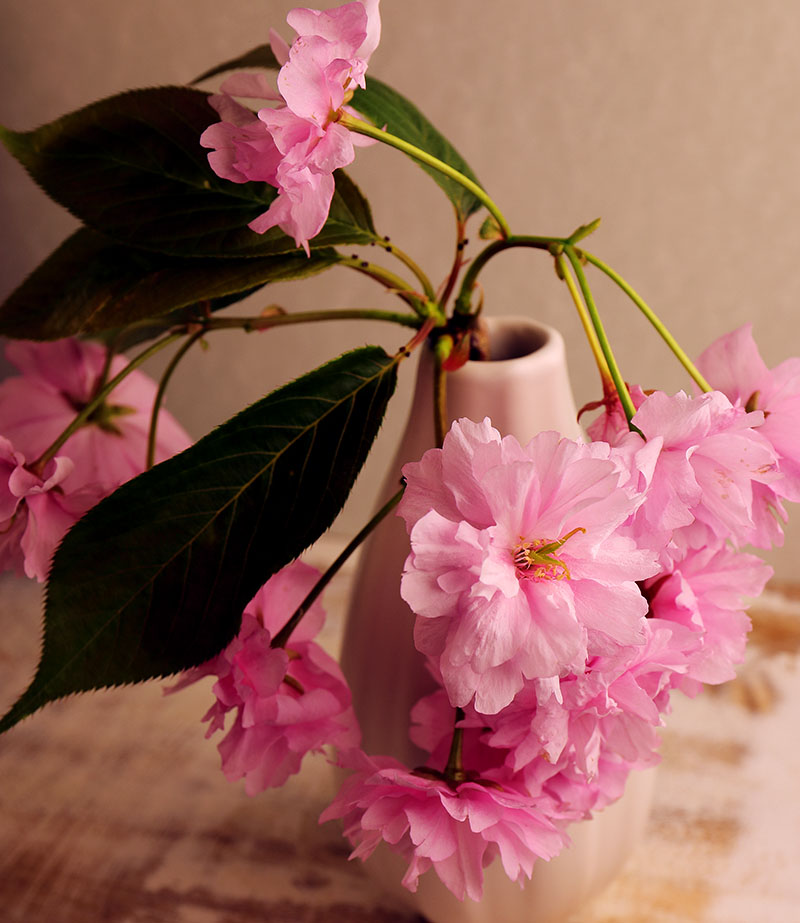 Cherry blossom in a vase.