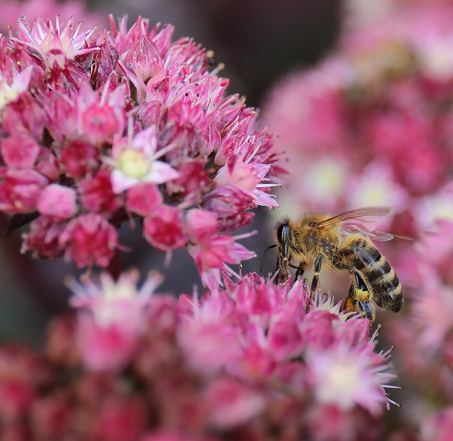 Buzz! Buzz! Bee-latedCelebrations!